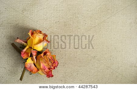 Dried Roses On A Painted Canvas