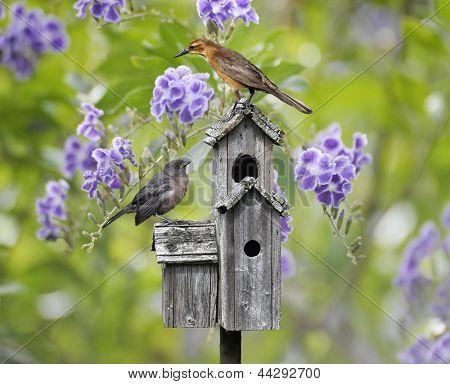 Female Black Bird And A Baby Bird Perching On A Bird House