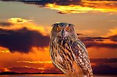 An owl and sunrise at The Great Salt Lake Utah poster