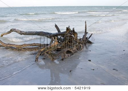 Wood Stump In The Gulf