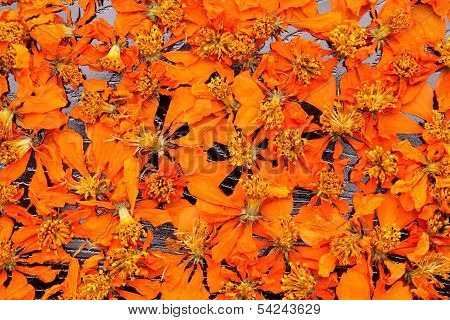 close up of dead cosmos flowers background poster