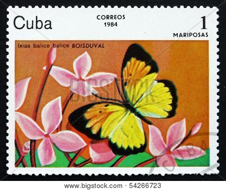 Postage Stamp Cuba 1984 Ixias Balice, Butterfly