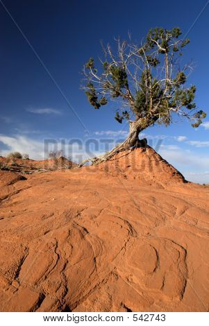 Twisted Tree, Red Sandstone