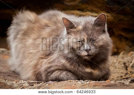 Happy Grey and Ginger Long-Haired Tortoiseshell Cat Sitting on a Rock