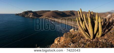 Desert beach panorama with cactus