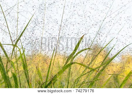 Grass And Seeds Background In Autumn