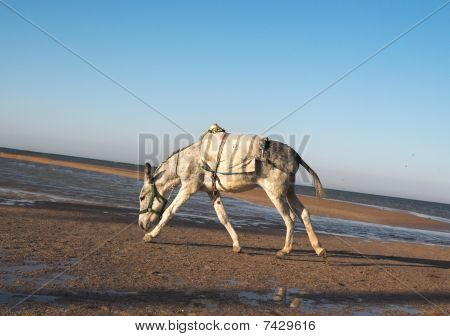 Running on a coast of the red sea a donkey poster
