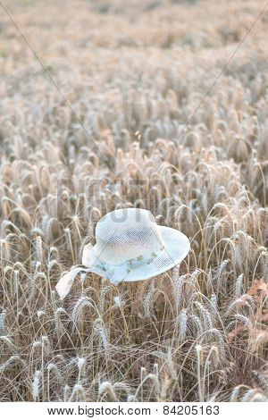 Straw Hat On Wheat