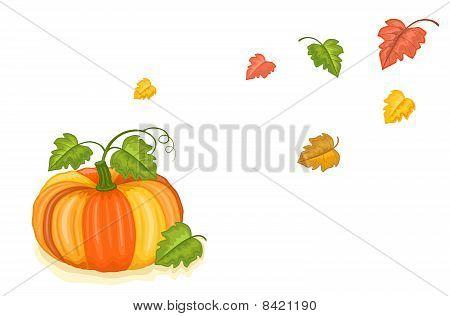 Autumn Freshly Harvested Pumpkin