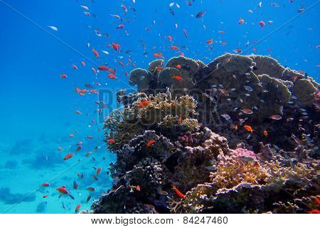 Colorful Coral And Many Fish