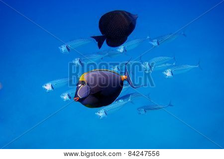 Fish In The Blue Sea