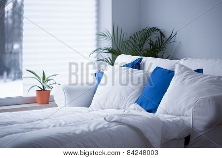 White And Blue Cushions