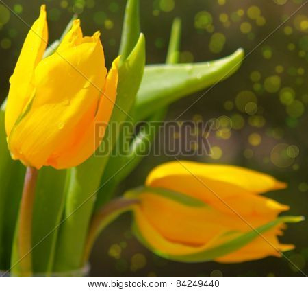 Yellow Tulips Bouquet.
