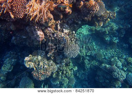 colorful coral reef with fire fish in the sea