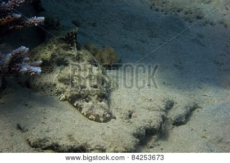 Crocodile Fish Lies