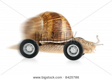 Speedy Snail On Wheels