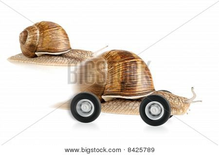 Racing Snail On Wheels