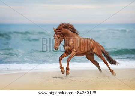Beautiful red horse galloping in a phase jump developing mane on solar background refreshing sea.