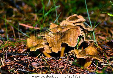 Mushrooms In The Autumn