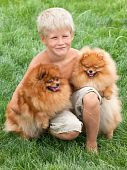 Smiling boy with two dogs are sitting on the grass poster