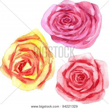 vector watercolor floral set