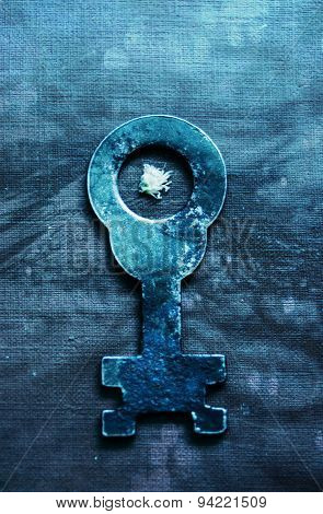 The key with white flower
