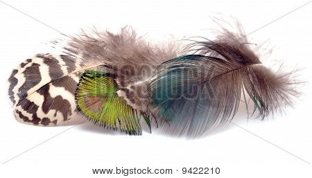 three birds feather isolated on white background poster
