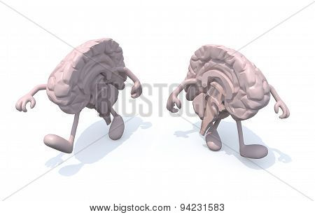 Two Half Brains That Walk