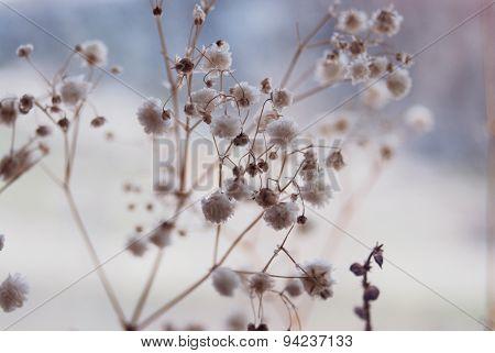 The tender flowers
