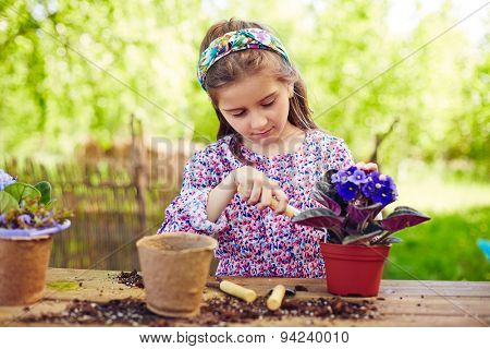Cute girl replanting African violets in natural environment