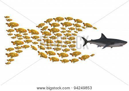 Fish Group Chasing Shark