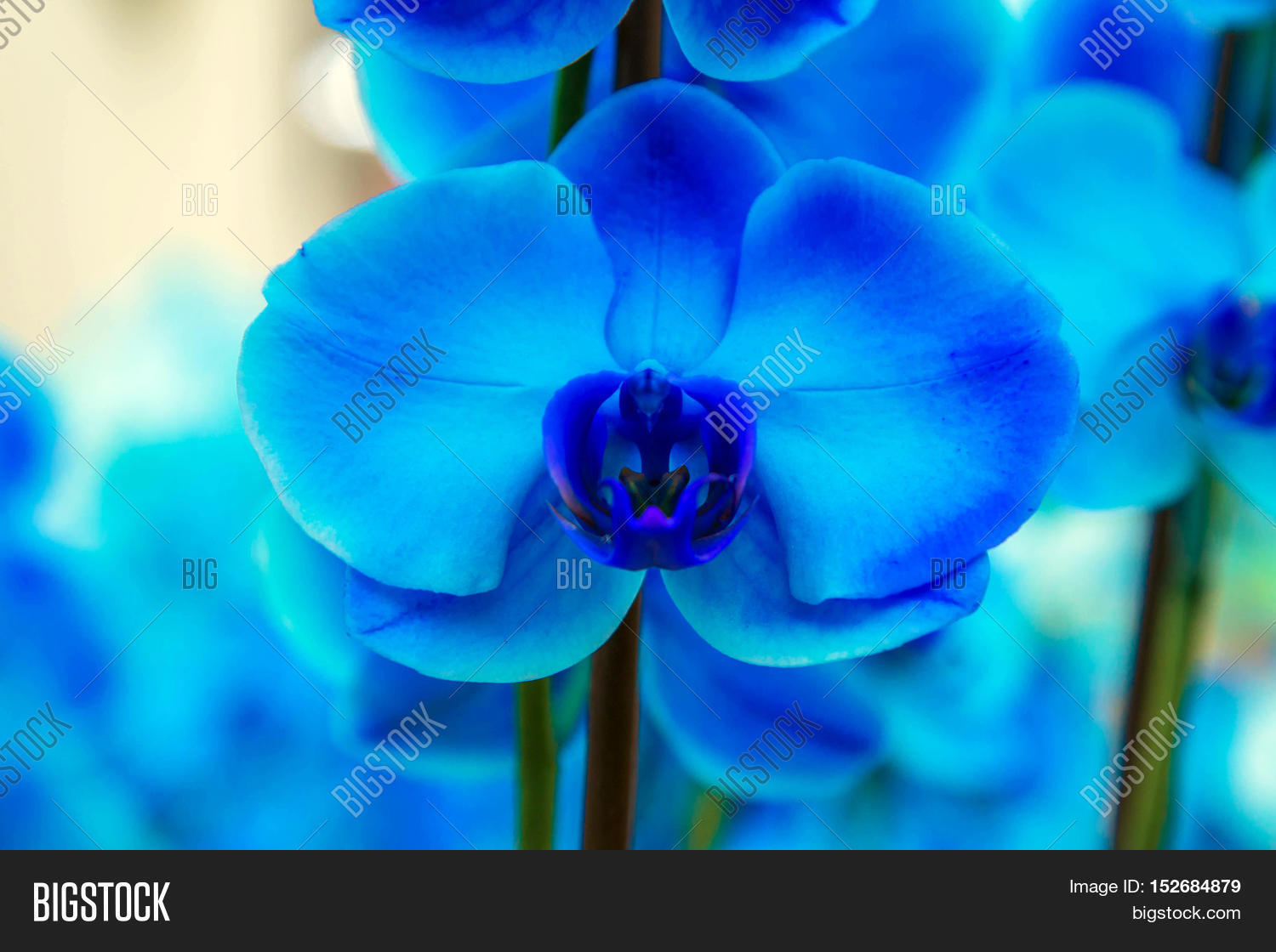 Orchid Flowers Orchid Image Photo Free Trial Bigstock