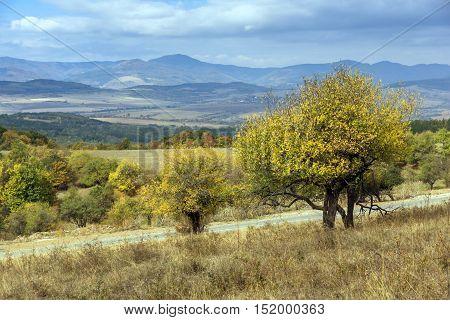 Yellow tree and Autumn view of Cherna Gora mountain, Pernik Region, Bulgaria