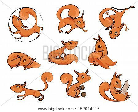 Set of cartoon cute squirrels in different poses icons isolated on white background. Vector eps 10 format