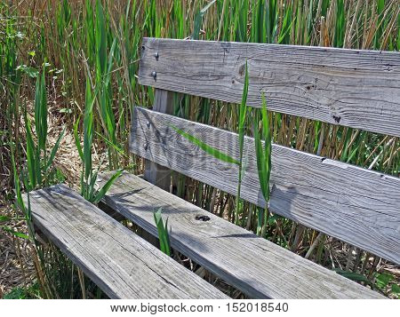 A lakeside park provides an environmentally friendly wooden bench for the weary along its reedy shoreline. Livonia Michigan.