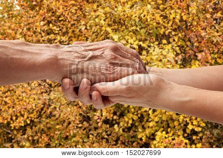 Autumn. Hands of an elderly senior holding the hand of a woman