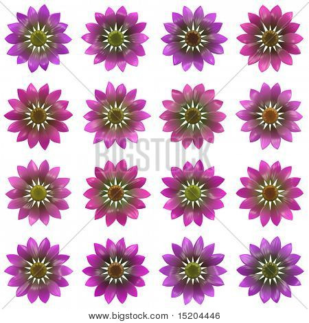 some isolated different purple flowers