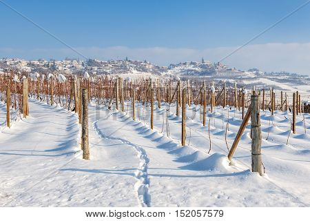Vineyards on the field covered with white snow under blue sky at winter in Piedmont, Northern Italy.