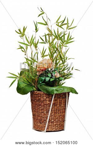 Flower arrangement of peon flower, lotus leaf and twigs of bamboo isolated on white background.