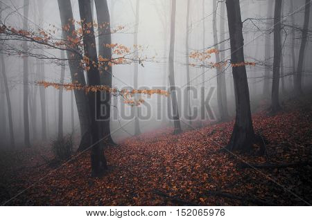 Beautiful autumn forest with fog and red foliage