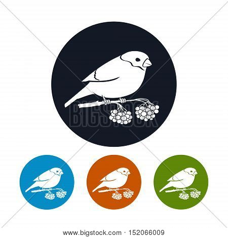 Four Types of Colorful Round Icons Bullfinch, Bullfinch Sitting on a Branch with Bunches of Rowan, Christmas Decorations, Vector Illustration
