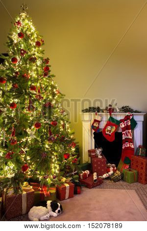 Home interior and fireplace and a dog sleeping under the christmas tree