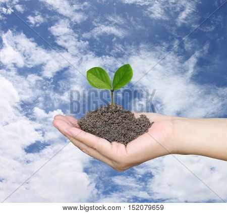 Soil in a Woman hand and treetop on soil with background blue sky in the daytime.