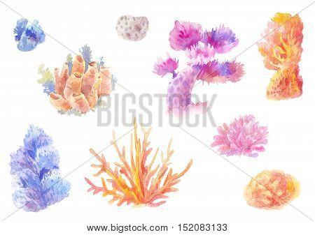 Сoral reef in watercolor. Set of hand-drawn seaweed. Isolated drawing ocean painting