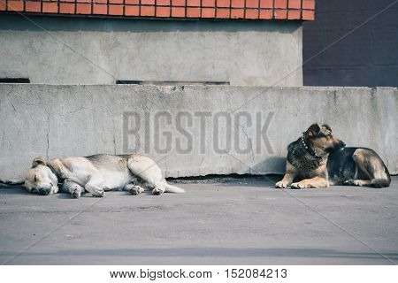 Two dogs laying down together against a concrete gray wall.