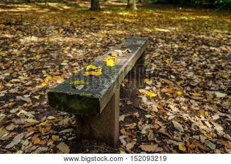 Lonely rural bench deep in autumn forest