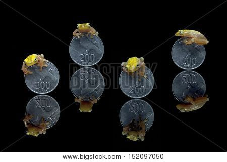 Little yellow tree frog sitting on coin