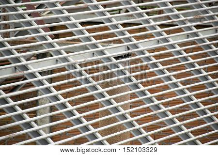 Structural steel cross stripe construction for roof