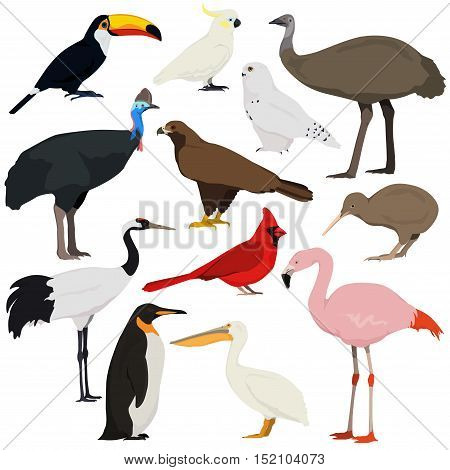 Cartoon birds collection. Different species of birds vector set. Red crowned crane cockatoo parrot pelican toucan flamingo penguin red cardinal emu cassowary kiwi golden eagle polar owl.
