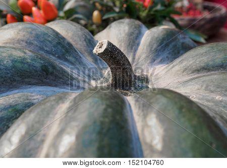 Pumpkin close-up. Green pumpkin side view. Gourd fragment close up. Squash background. Sinderella pumpkin